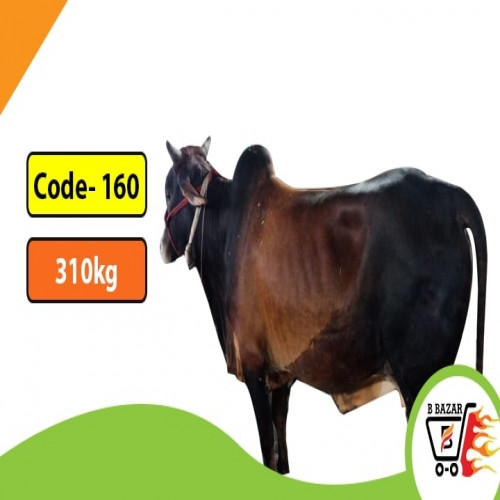 Organic Black cow 315kg-395tk