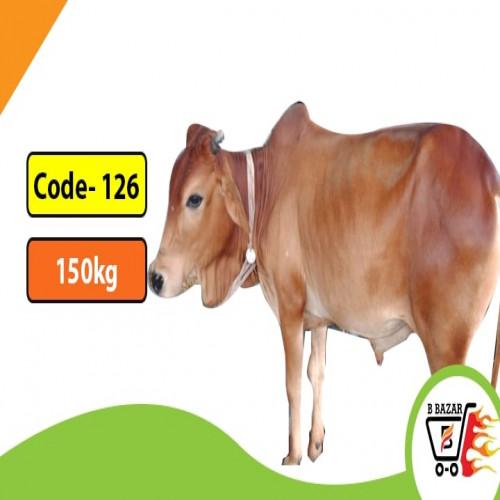 Organic red cow 150kg-425tk