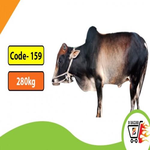 Organic Black cow 280kg-395tk