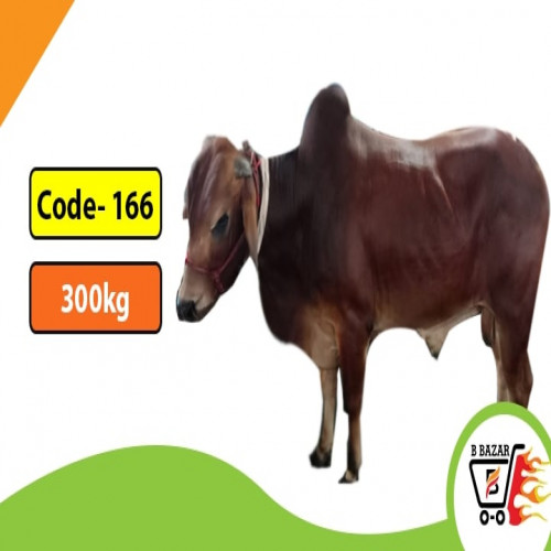 Organic Red cow 300kg-425tk