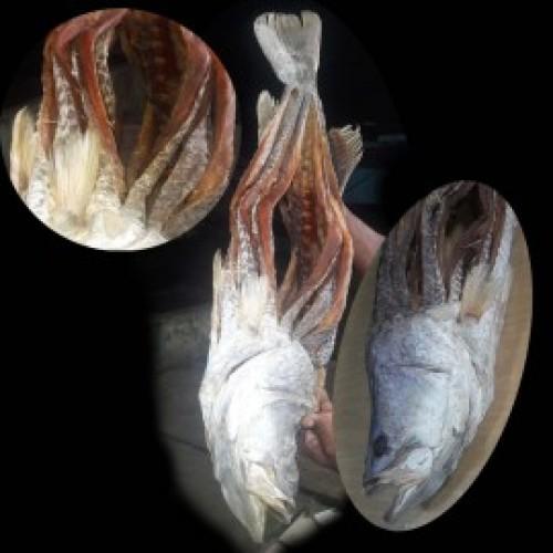 Organic Ocean koral Diy Fish 250gm 470tk