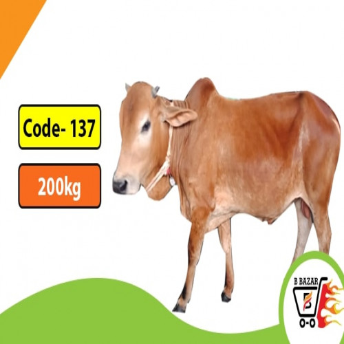 Organic Red cow 200kg (425tk)
