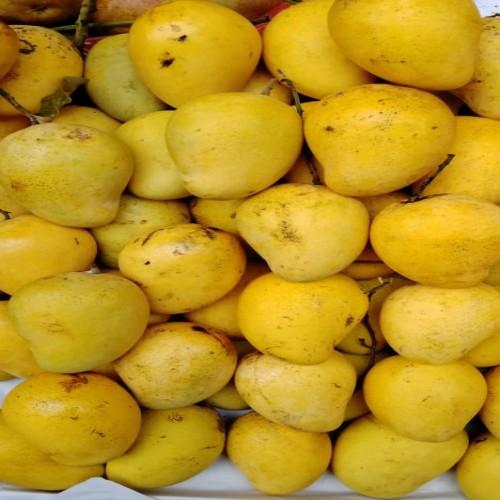 Thai Mango 1Kg